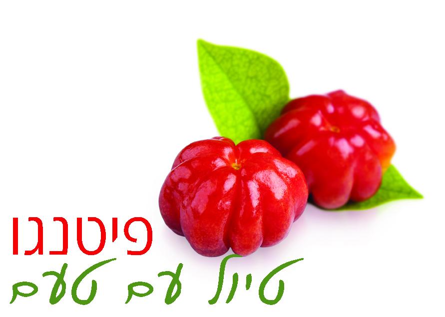 לוגו פיטנגו